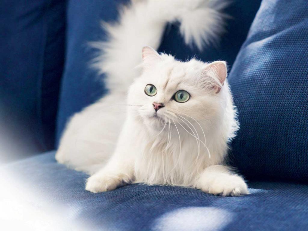 Микоз у кошек