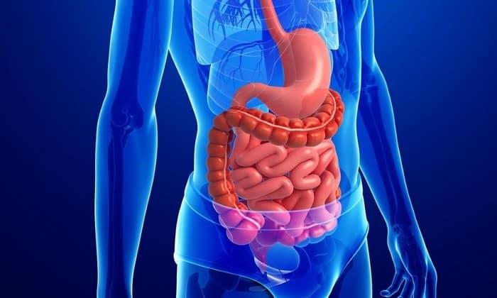 При терапии не только отмечается снижение потребности в пище, но и улучшается состояние ЖКТ. Это обеспечивается благодаря усиленной чистке органов пищеварения