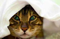 Симптомы и признаки проявления простуды у кошек