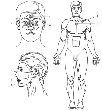 Рисунок 1 - оны воздействия при лазерной терапии заболеваний уха, горла, носа
