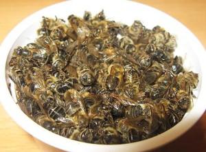 лечение мертвыми пчелами сахарного диабета
