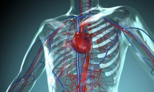 Участие пиридоксина в метаболизме положительно отражается на работе сердечно-сосудистой системы
