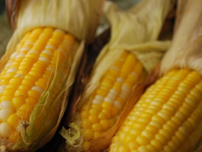 Кукуруза в початках вареная