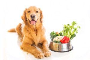 Пес и здоровая пища