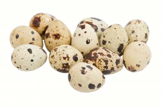 Лечение панкреатита перепелиными яйцами