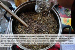 Рецепт отвара из расторопши