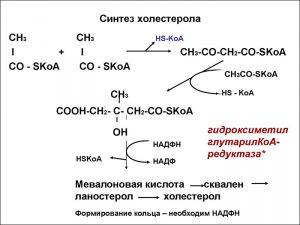 Синтез холестерола