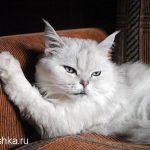 Глисты у кошек — как лечить?