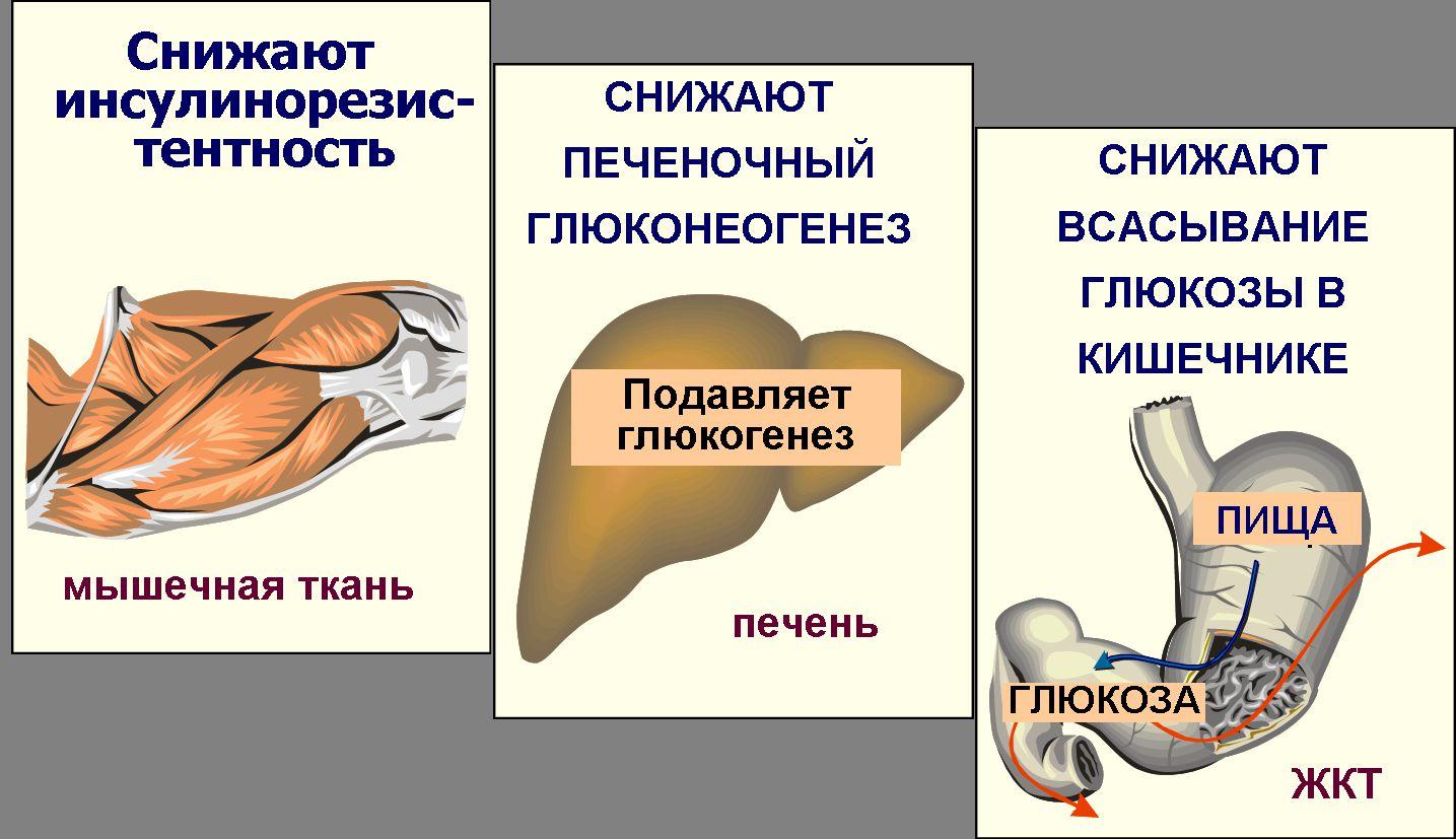 глюкофаж таблетки действие