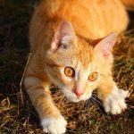 Что делать, если кот начинает чихать?