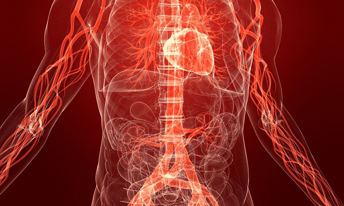 Препарат с боярышником предназначается для регуляции функции кровообращения