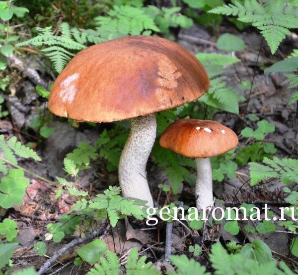 В грибах много клетчатки.