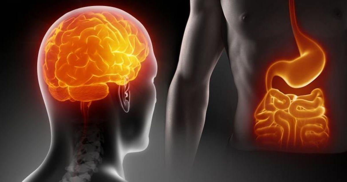 Мозг получает и отправляет сигнал о насыщении