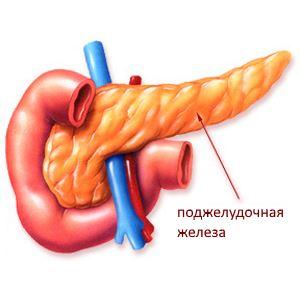 Что такое поджелудочная железа