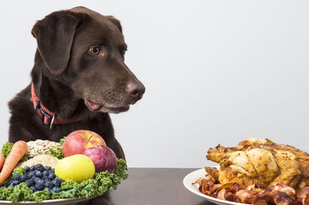 Неграмотно подобранный рацион питания может являться причиной развития болезни