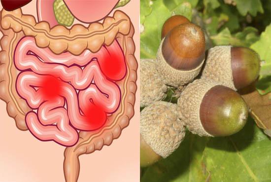Желуди при расстройстве желудка