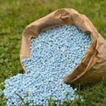 Бархатцы выращивание из семян когда сажать