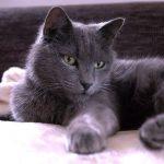 Желудочные расстройства у кошек