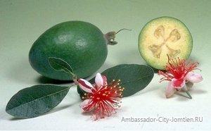 Плод фейхоа