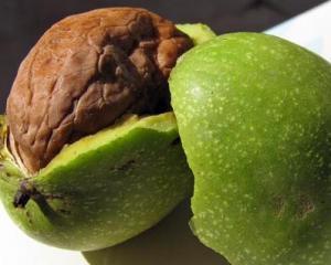 Орехи грецкие польза и вред
