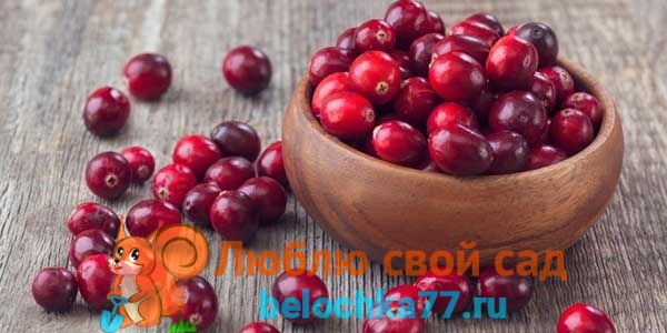 Подготовка ягод, пропорции