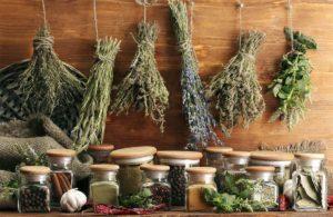 Лекарственные травы - древний и проверенный способ излечения организма