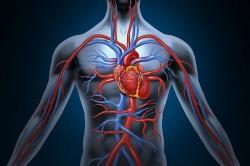 Польза киселя для сердечно-сосудистой системы