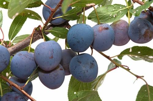 Употреблять фрукт, особенно при проблемах с поджелудочной железой, нужно без кожуры