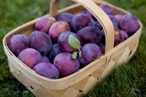 Слива - очень вкусный, полезный и аппетитный фрукт