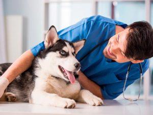 удаление поджелудочной железы у собак, снижение сахара в крови, человеческий инсулин