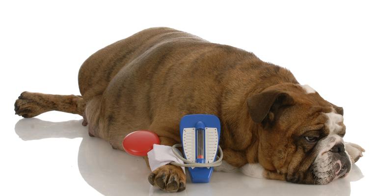 Сахарный диабет у собаки