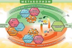 Обмен веществ в организме