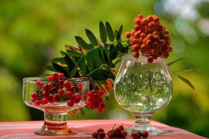 Растения, снижающие уровень холестерина в крови