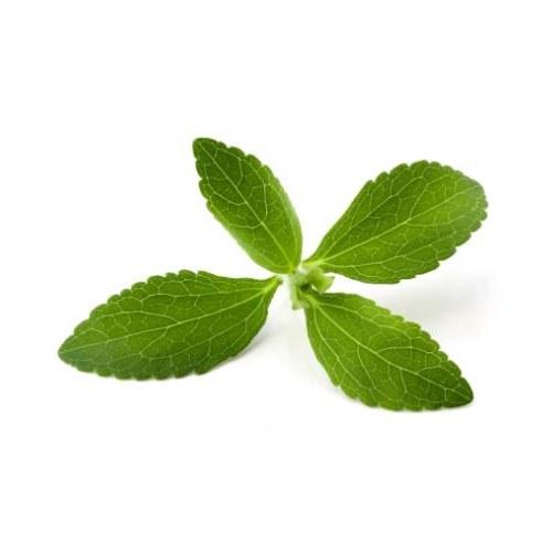 Стевия растение